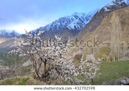 Cherry blossoms season in the morning at Hunza valley , Northern Paksitan with Karakorum range - stock photo