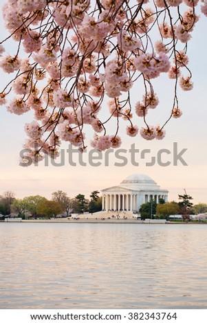 Cherry blossoms sunrise in Washington DC around the Tidal Basin - stock photo