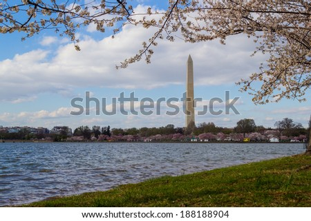 Cherry Blossoms Washington DC Tidal Basin