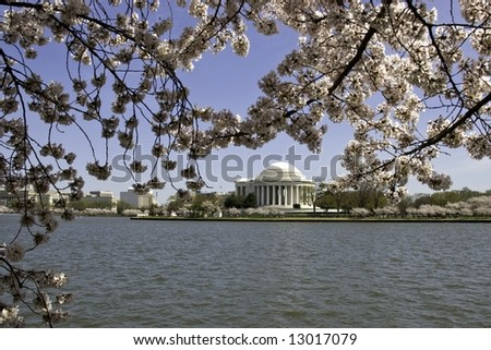 Cherry Blossoms with Jefferson Memorial