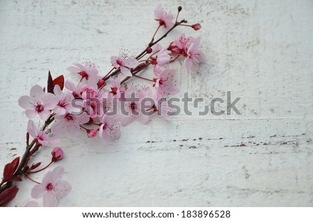 cherry blossoms with wood