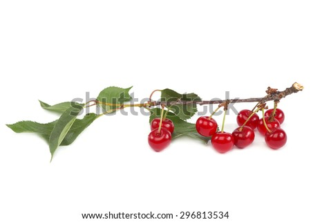 Cherry branch with fruits isolated on white background. - stock photo