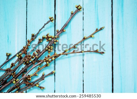 cherry branches with buds on a wooden background - stock photo