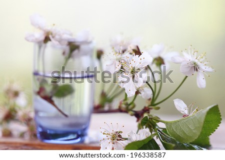 cherry flowers and branches green background foliage rain