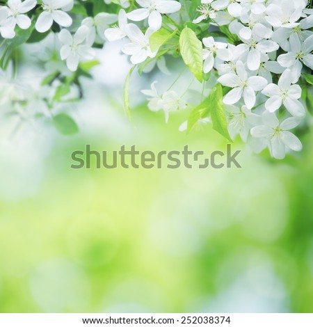cherry flowers in sunny day on green blurred background with selective focus - stock photo