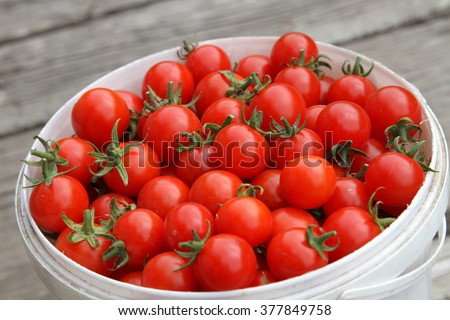 Cherry tomatoes in a bucket
