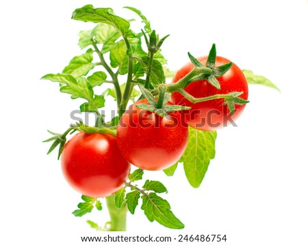 Cherry tomatoes. Ripe red mini tomatoes.Natural vegetable. - stock photo