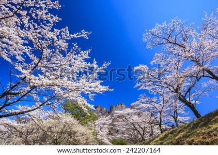 Cherry tree and Mt. Myogi in spring, Japan - stock photo