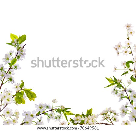 cherry-tree flowers half frame isolated on white background - stock photo