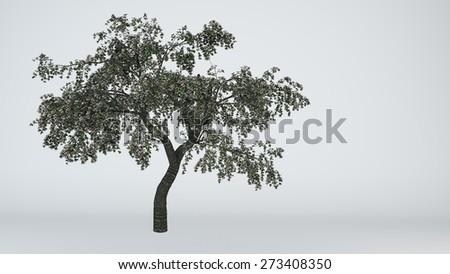 cherry tree isolated - stock photo