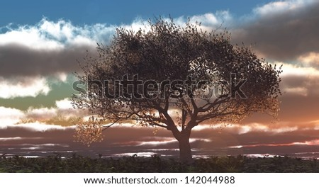 Cherry tree with sunset,  digitally rendered illustration - stock photo