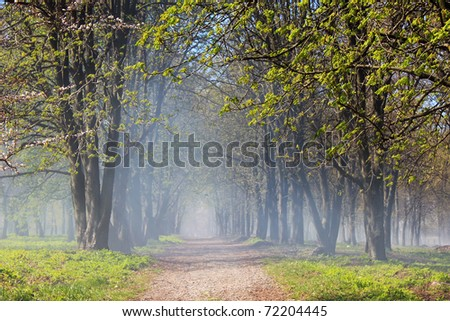 Chestnut Alley in the fog on a spring morning - stock photo