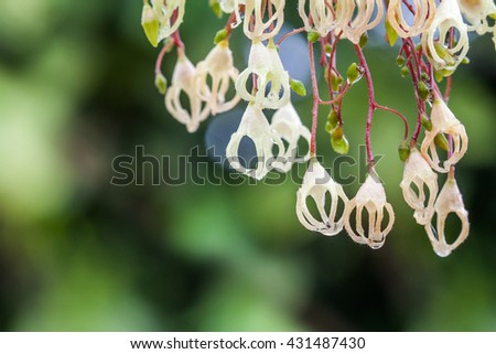 chestnut flowers in full bloom on green background - stock photo