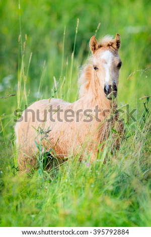 Chestnut foal on green background - stock photo