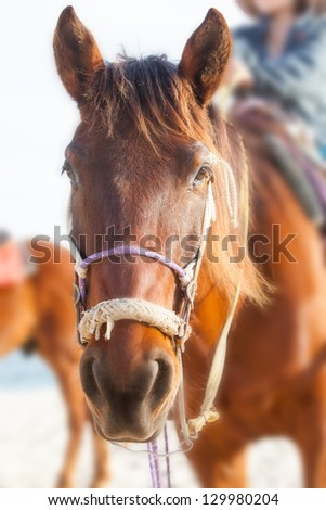Chestnut horse on the beach - stock photo