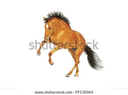 chestnut horse rearing - stock photo