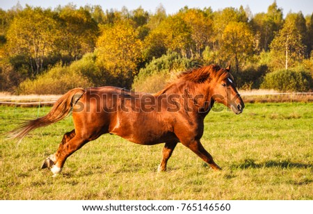 Lying Down Horse Stock Images, Royalty-Free Images ...
