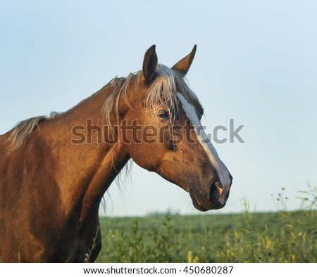 chestnut horse with a white blaze on her head walks on the green field