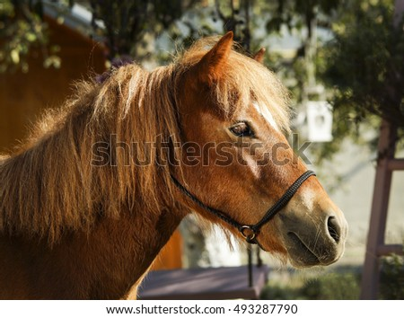 chestnut horse with a white blaze on the head