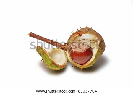 Chestnut in the shell isolated - stock photo