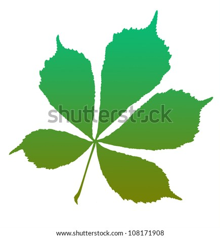 Chestnut leaf isolated on the white background. - stock photo