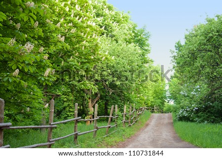 Chestnut trees along a road in rural Ukraine - stock photo