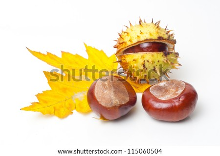 Chestnut with colorful leafs on white background - stock photo