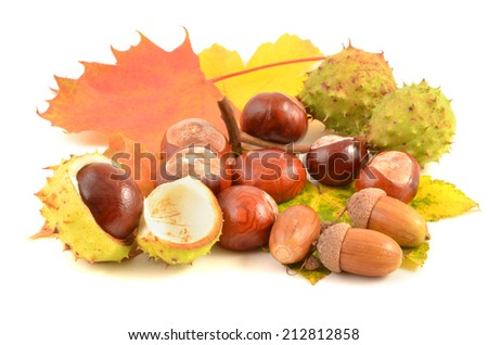 chestnut with crust and acorn, on autumn leaf, white background - stock photo