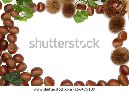 Chestnut with leaves arranged on white background - stock photo