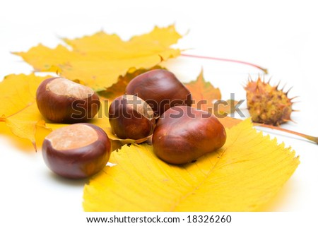 Chestnuts and autumn leaves