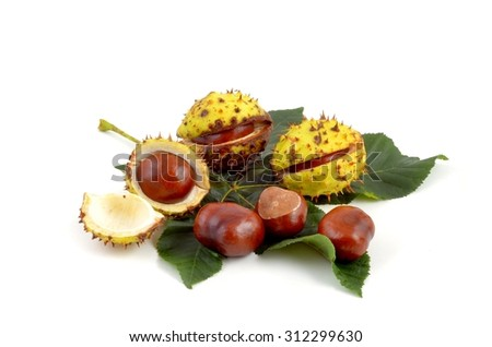 Chestnuts. Autumn leaves and chestnuts on white background. Chestnuts nuts. Chestnuts fruits. Chestnuts decoration. Chestnuts and leaves with copy space.chestnut with crust, on green leaf. - stock photo