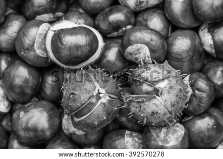 chestnuts  - autumnal still life - stock photo