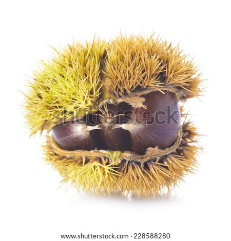 Chestnuts in its spiny burr isolated on a white background - stock photo