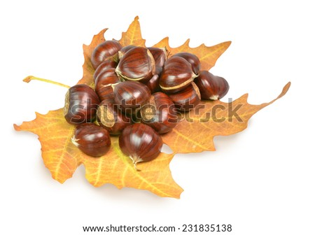 chestnuts  isolated on autumn yellow leaf - stock photo