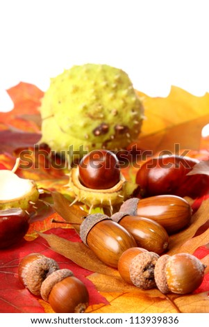 Chestnuts on colorful autumn