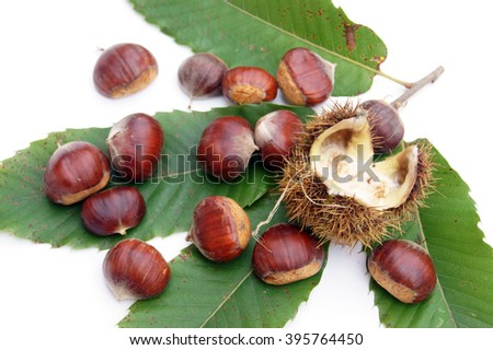 Chestnuts on green leaves - isolated on white                     - stock photo