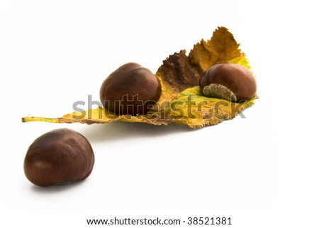 Chestnuts on leaf autumnal colored