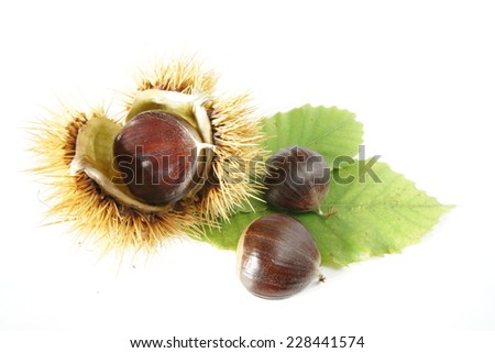 chestnuts with leafs isolated