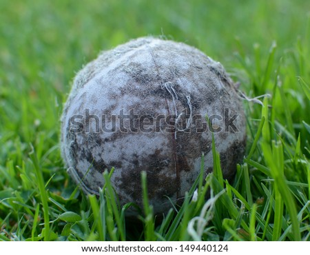 Chewed, old tennis ball used as a dog toy, against a lawn background - stock photo