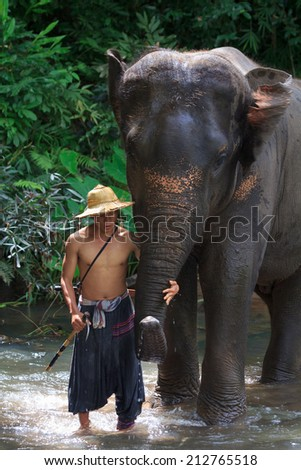 CHIANG MAI, THAILAND - Aug. 24: Daily elephants bath at The Mae-Pin Elephant Camp, mahouts bath and clean the elephants in the the river , August 24, 2014 in Chiangmai, Thailand.