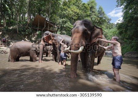 CHIANG MAI, THAILAND - AUGUST 11, 2015 : Foreigner Tourist have activity to experience the local lifestyle and bathing with elephant in river. Famous Activity fot the tourist in Chiang Mai, Thailand.