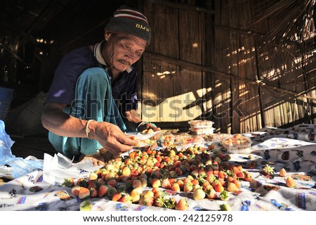 CHIANG MAI THAILAND - DECEMBER 31 : Doi Ang Khang Village, Unidentified elderly men ethnic stuffing the strawberry to be sold to tourists. on December 31 , 2014 in Chiang Mai, Thailand. - stock photo