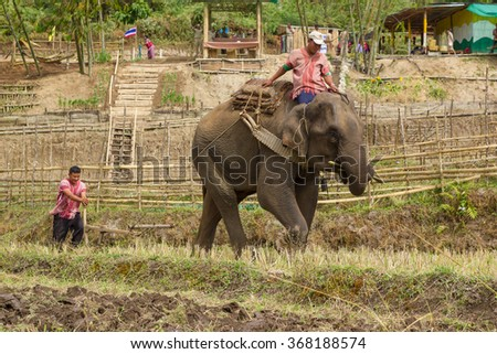 """Chiang Mai, Thailand - 25 December 2015: """"Elephants Ploughing Paddy Fields"""" Ceremony at Baan Na Gian, Omkoi in  Chiang Mai, Thailand.  - stock photo"""
