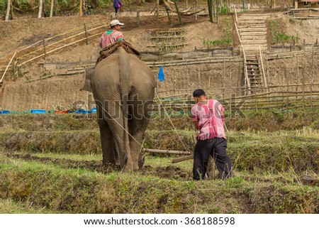 """Chiang Mai, Thailand - 25 December 2015: """"Elephants Ploughing Paddy Fields"""" Ceremony at Baan Na Gian, Omkoi in  Chiang Mai, Thailand  - stock photo"""