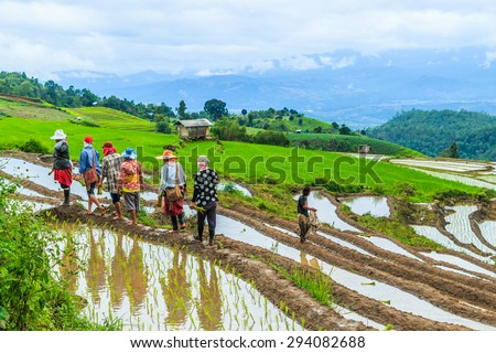 CHIANG MAI, THAILAND - JULY 21, 2014: Farmers planting rice by transplanting rice seedlings on July 21 in Pa Pong Pieng, Mae Chaem, Chiang Mai province, Thailand
