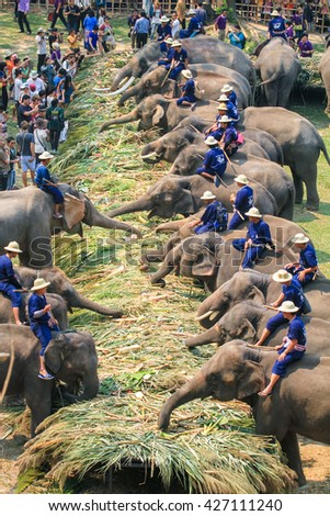 Chiang Mai, Thailand - MARCH 13, 2014 : Group of elephant eating fruit in national Thai elephant day at Mae Sa elephant camp in Chiang Mai, Thailand on March 13, 2014.