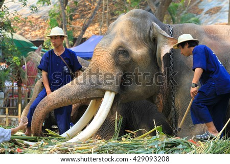 CHIANG MAI, THAILAND - MARCH 13, 2014 : Trainer and his elephant waiting new show at Maesa Elephant Camp on March 13, 2014 in Chiang Mai, Thailand.