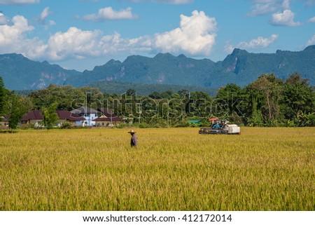 CHIANG MAI THAILAND- NOV 21: Green Terraced Rice Field in north on November 21, 2015 in Chiang Mai, Thailand. - stock photo