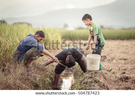 CHIANG MAI,THAILAND:26 OCTOBER 2016:Happy men in the rice field.