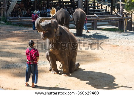 CHIANGMAI THAILAND 03 DEC 15 elephant showed at The Maesa elephant camp on 03 December, 2015 in Chiangmai, THAILAND